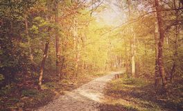 Autumn forest on a sunny day Royalty Free Stock Photography