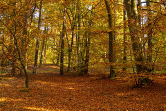 Autumn forest on a sunny day Stock Photo