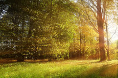 Autumn forest sunny landscape - forest autumn trees and sunbeams shining through the trees. Forest autumn nature. Forest autumn sunny landscape - forest autumn royalty free stock images