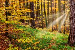 Autumn Forest With Sunray. Woodland with colorful deciduous trees stock photo