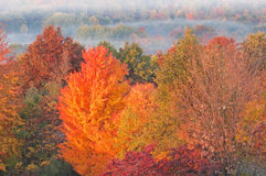 Autumn Forest at Sunrise Stock Photo