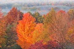 Autumn Forest at Sunrise Stock Photo