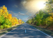 Autumn forest in sunrise Royalty Free Stock Photos