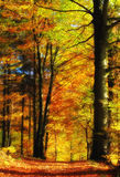 Autumn forest at sunset Stock Image