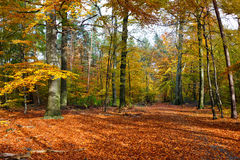 Autumn forest at sunset. Vibrant image of autumn forest at sunset Stock Photo