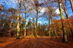 Autumn forest at sunset. Vibrant image of autumn park at sunset Stock Images