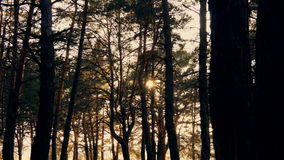 Autumn forest at sunset stock footage