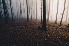 Autumn forest at sunset with fog and silhouette Stock Images