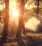 Autumn forest in sunset light. Beautiful nature Royalty Free Stock Photography