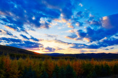 The autumn forest sunset Stock Image