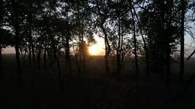 Autumn forest at sunset, slow motion in the sun. Autumn oak forest at sunset, slow motion in the sun stock video