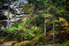 Autumn Forest sur la pente de montagne Photographie stock libre de droits