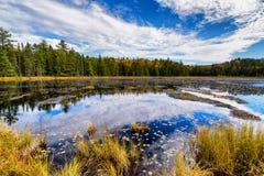 Autumn Forest Surrounding een Vijver royalty-vrije stock fotografie