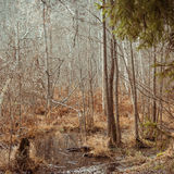 Autumn forest swamp Royalty Free Stock Images