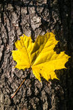 Autumn forest symbol Royalty Free Stock Images