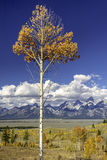 Autumn forest and Tetons Wyoming Stock Images