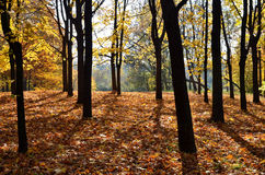 Autumn forest on top of the mountain Stock Photo