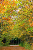 Autumn Forest Track. This image shows forest track in fall stock image