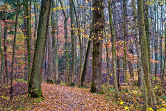 Autumn forest trail Stock Images