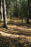 Autumn forest trail Royalty Free Stock Photos