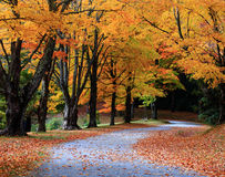 Autumn Forest Trail Royalty Free Stock Image