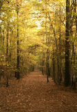 Autumn Forest Trail. A trail through the forest during autumn Royalty Free Stock Images