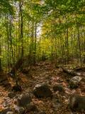 Autumn Forest Trail, Adirondack-Bergen, New York royalty-vrije stock fotografie