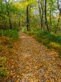Autumn Forest Trail, Blad Behandeld Voetpad stock afbeeldingen