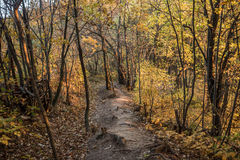Autumn forest trail. Royalty Free Stock Photos