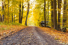Autumn forest trail Stock Photo