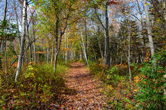 Autumn forest trail landscape Stock Image
