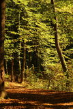 Autumn forest trail Royalty Free Stock Photography