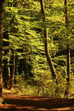Autumn forest trail Stock Image