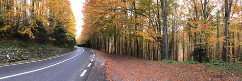 Autumn forest at the Transfagarasan pass Stock Photo