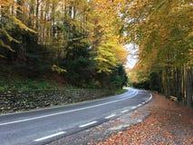 Autumn forest at the Transfagarasan pass Stock Photography