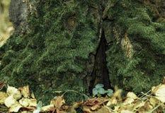 the autumn forest Stock Photos