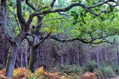 Autumn forest tree green and brown royalty free stock photos
