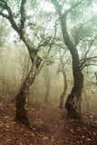 Autumn forest. Trees in the autumn forest Stock Image