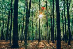 Autumn forest trees. Royalty Free Stock Images