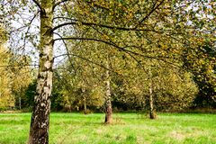 Autumn forest and trees. Autumn images in colorful feeling, forest and field Stock Image