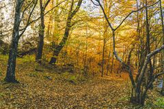 Autumn forest trees beautiful. Autumn forest trees. nature green wood  backgrounds Royalty Free Stock Images
