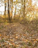Autumn forest trees. Stock Photo