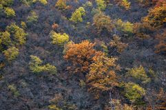 Autumn. Forest with trees in autumn colors Stock Images