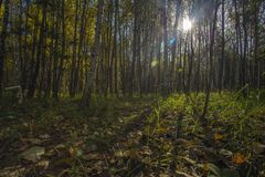 Autumn forest trees. green forest sunlight. Stock Photography