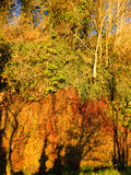 Autumn forest with trees grows on the rock outdoor Royalty Free Stock Images