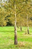 Autumn forest and trees. Autumn images in colorful feeling, forest and field Royalty Free Stock Photo