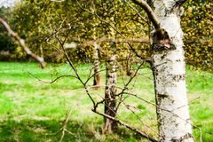 Autumn forest and trees. Autumn images in colorful feeling, forest and field Royalty Free Stock Image