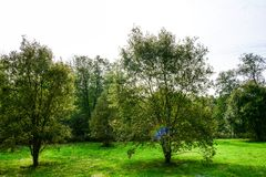 Autumn forest and trees. Autumn images in colorful feeling, forest and field Royalty Free Stock Photography