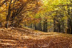 Autumn forest, trees and the leaves were falling. Colorful autumn forest, trees and brown fallen leaves stock images