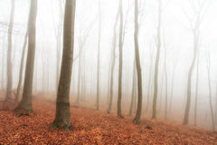 Autumn forest with trees at mist.  Stock Images